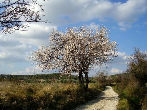 En février 2008, certains arbres étaient déjà en fleurs, y compris dans le Nord.
