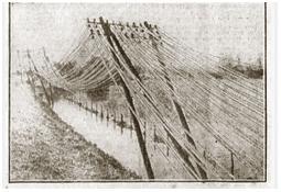 Photo de l'Almanach d'événement météo du 13/3/1931