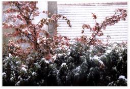 Photo de l'Almanach d'événement météo du 14/4/1999
