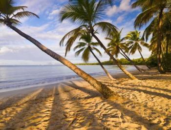 Évasion : le climat de la Guadeloupe et de la Martinique