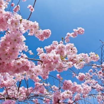 Retour des beaux jours pour la fin mars 2021 : le printemps s'installe-t-il pour de bon ?