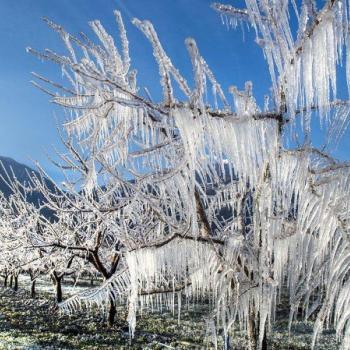 Bilan : froid record, végétation endommagée et neige en plaine du 6 au 8 avril 2021