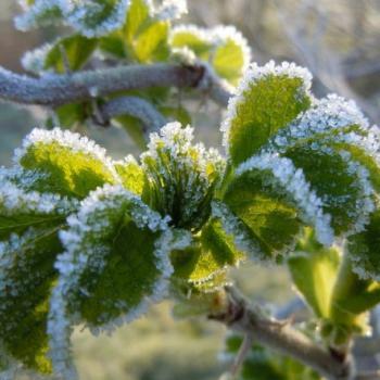 Fait-il vraiment plus froid durant les Saints de Glace ?