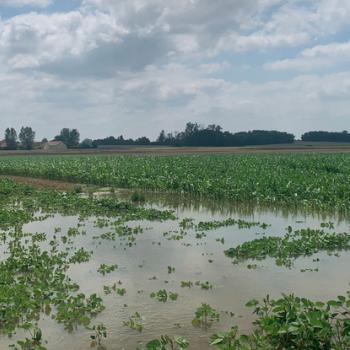 Eté 2021 humide : le risque de sécheresse diminue