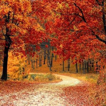 L'automne en couleur : cette saison où nos forêts changent d'apparence