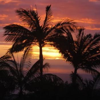 Tropicalisation du climat à Nice - un marqueur du Réchauffement Climatique