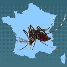 Les conditions météo favorisent la prolifération des moustiques