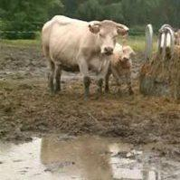 Agriculture, faune et flore impactés par la pluie au Nord de la France