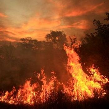 Incendies en Amazonie, une catastrophe écologique mondiale en devenir