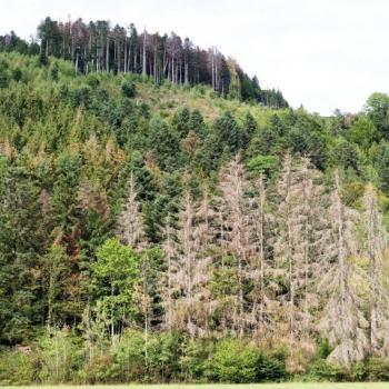 Sécheresse et chaleur : Les forêts françaises dépérissent