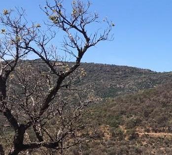 Sécheresse - dépérissement massif des forêts en France