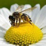 Soleil & douceur réveillent précocément végétation & pollens