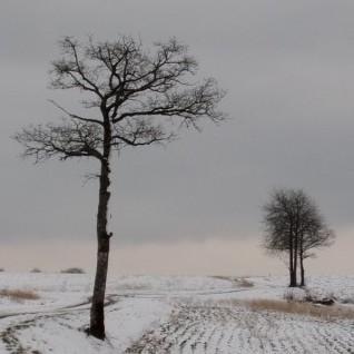 Une première décade de février assez froide