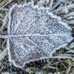 Décembre débute dans le froid