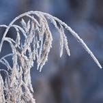 Sevère et tardif coup de froid, vent glacial et neige