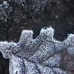 Les gelées sont au rendez-vous de l'automne