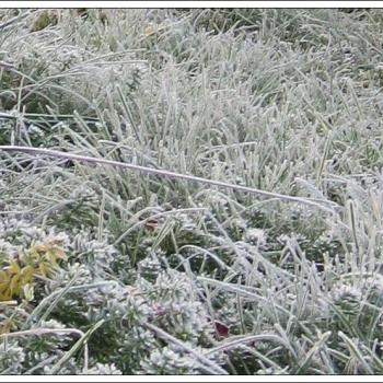 Première gelée en plaine & première neige en montagne en cette fin août