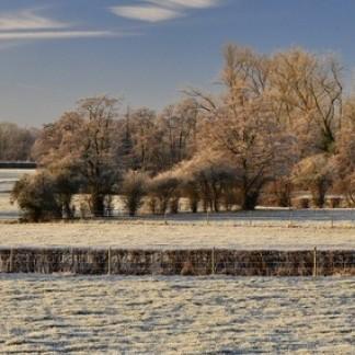 Fréquentes et parfois fortes gelées - givre sur la végétation