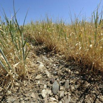 Une sécheresse des sols aggravée en Mai