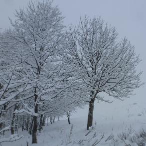 Baisse des températures - retour de la neige en montagne