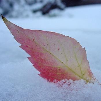 De l'automne à l'hiver le week-end prochain avec neige en plaine ?
