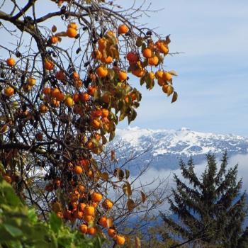 Vos plus belles photos de l'automne