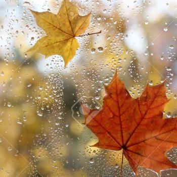 L'automne et la pluie arrivent!