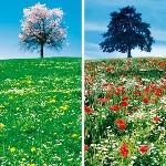 Fin du printemps et début de l'été - Tendance météo ?