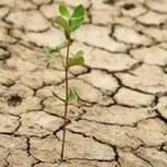La sécheresse des sols superficiels s'étend
