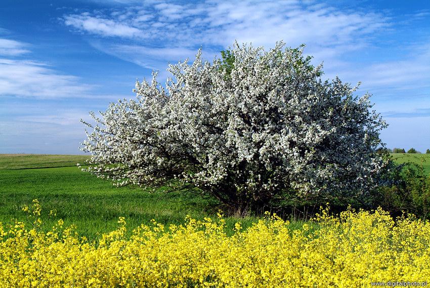 Image d'illustration pour Hiver doux : réveil de la nature et des pollens