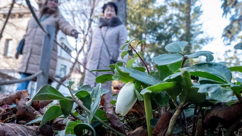 Image d'illustration pour Douceur remarquable en Russie - l'hiver se poursuit en douceur