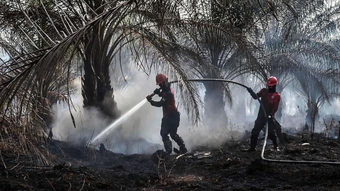 Image d'illustration pour De violents incendies enveloppent l'Asie du Sud-Est dans un nuage toxique