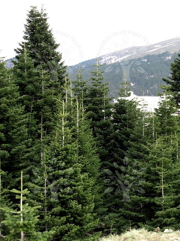 Image d'illustration pour Sécheresse - dépérissement massif des forêts en France