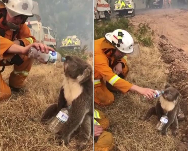 Image d'illustration pour L'Australie en proie à des incendies violents et hors de contrôle