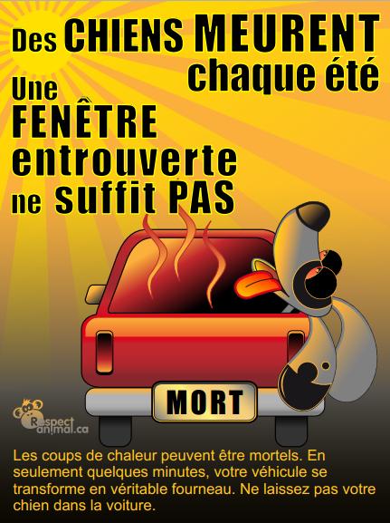 Image d'illustration pour Fortes chaleurs : ne laissez jamais un chien dans une voiture