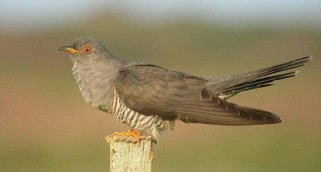 Image d'illustration pour Les conséquences d'un hiver trop doux sur les oiseaux et la biodiversité