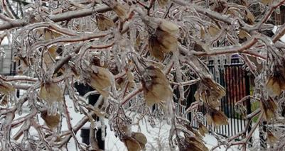 Image d'illustration pour Froid, neige et verglas au Canada et aux Etats-Unis