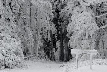Image d'illustration pour Neige et froid à l'Est mais sans excès