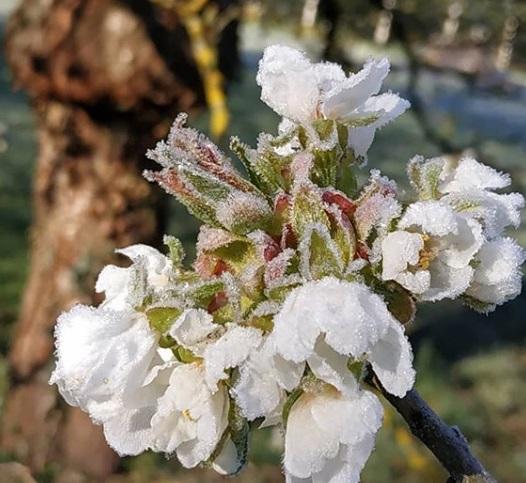 Image d'illustration pour Gel d'avril préjudiciable pour la végétation