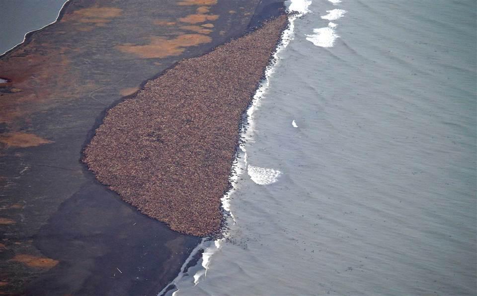 Image d'illustration pour Les multiples conséquences du retrait des glaces en Arctique