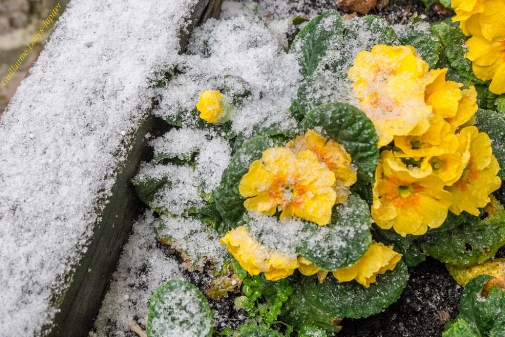 Image d'illustration pour France, Danemark, Etats-Unis - la neige gagne sur terrain
