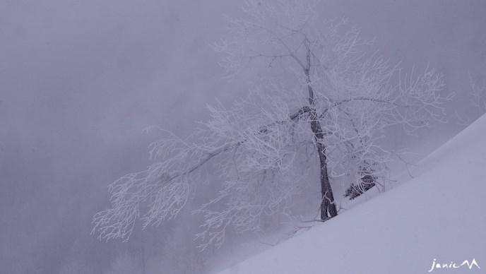 Image d'illustration pour Les vacanciers de février profitent de la neige en montagne