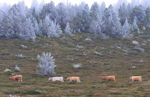 Image d'illustration pour Quelques chutes de neige sur les Pyrénées