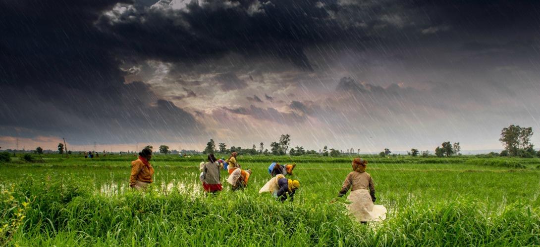 Image d'illustration pour De bonnes odeurs de pluie ce week-end