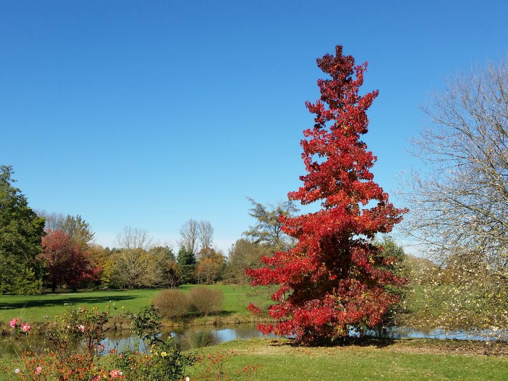 Image d'illustration pour Vos plus belles photos de l'automne