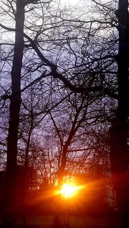 Grands chênes et soleil levant