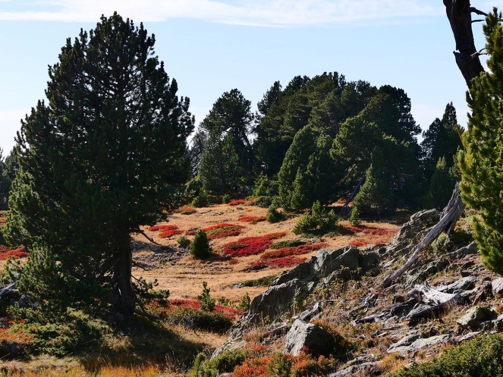 Jardin d'automne à Chamrousse