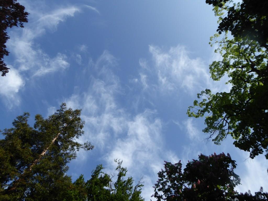 Les arbres chercheraient-ils à toucher les petits nuages ?