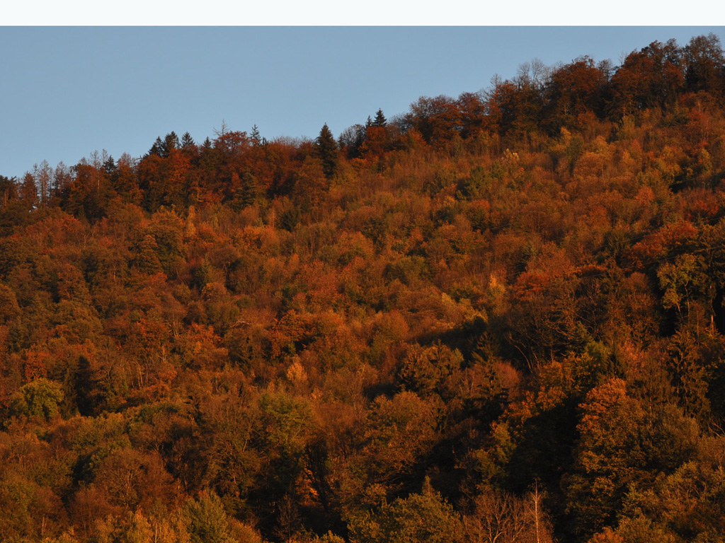 Couleurs d'automne au soleil couchant.MG