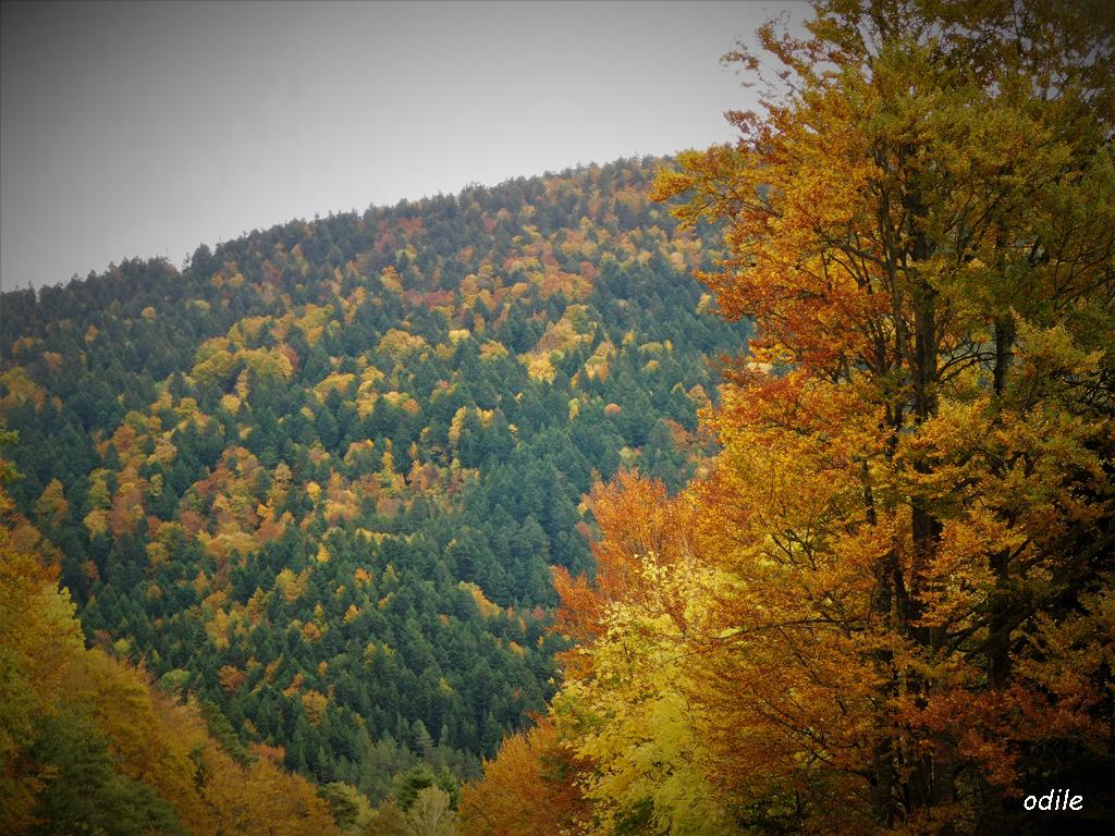 feux de l'automne malgré la pluie